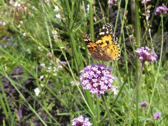 http://b0uille.cowblog.fr/images/P1040426.jpg