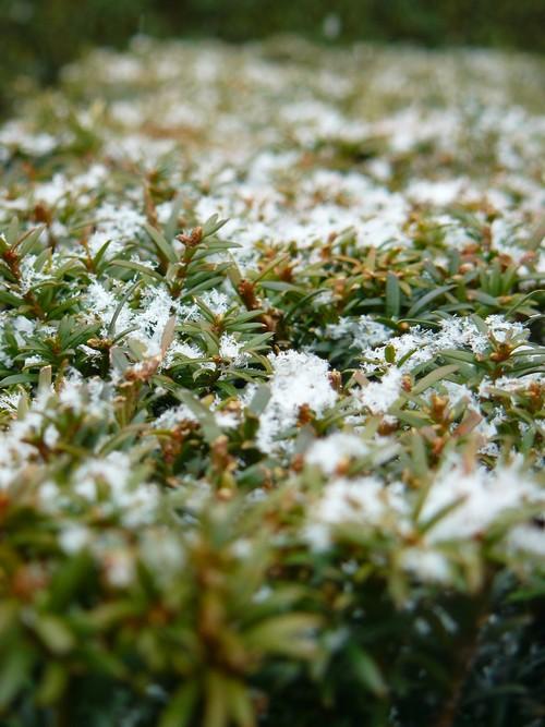 http://b0uille.cowblog.fr/images/P1050756.jpg